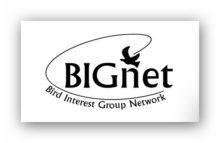 BIGnet logo