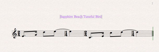 Pied Butcherbird - Sapphire Beach NSW