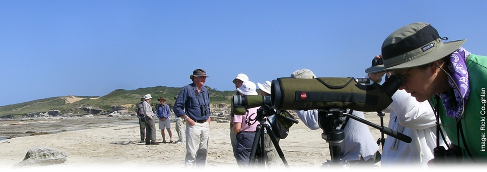 <h2><strong>Sharing,</strong> Exploring & Discovering</h2><h3>Discovering Shorebirds outing</h3>