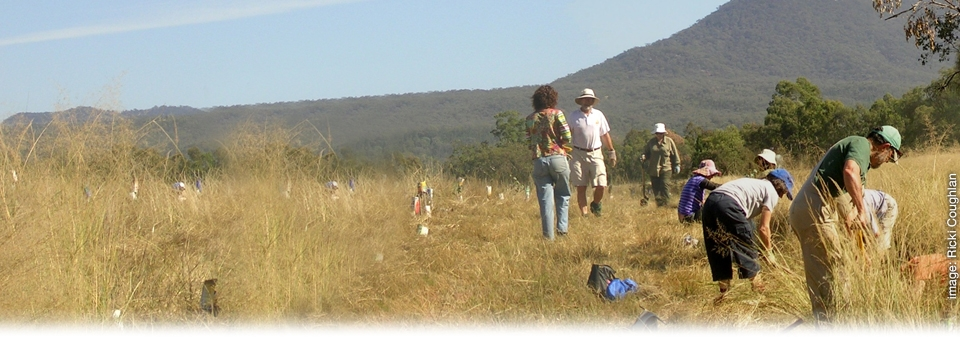 <h2>Planting a <strong>future</strong> for threatened species</h2><h3>Capertee Valley tree planting</h3>
